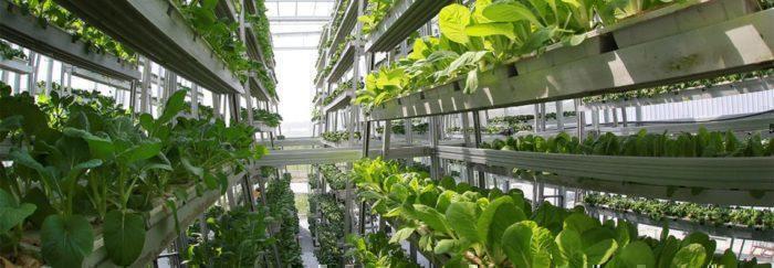 Natural light vertical farm Emirates