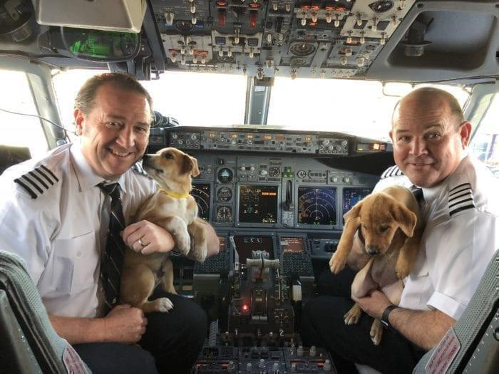 Southwest airlines dogs