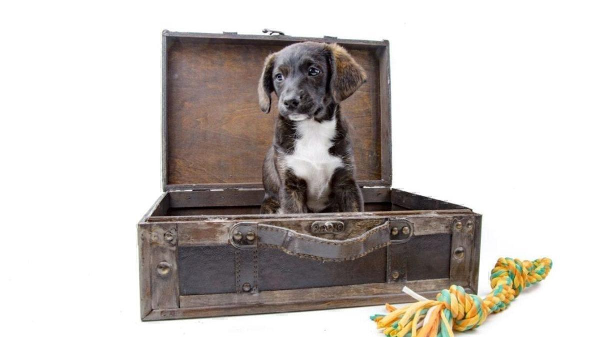 Which US Airlines Allow Dogs & Should More Airlines Allow