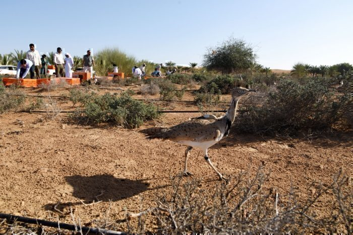 Emirates And Wildlife Preservation, An Exclusive Interview