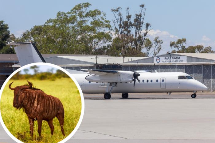 Wildebeest, Safarilink, Dash 8