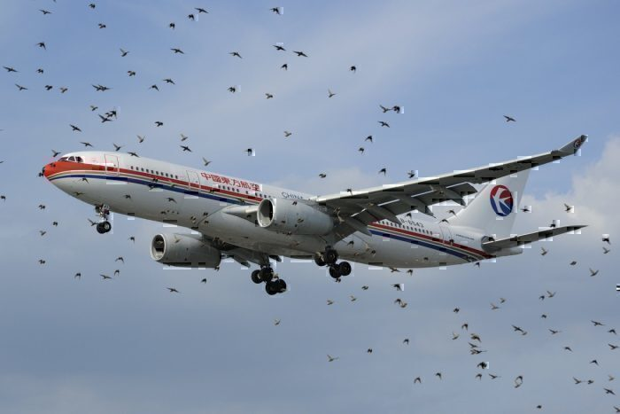 A China Easter Airbus A330 behind a flock of birds