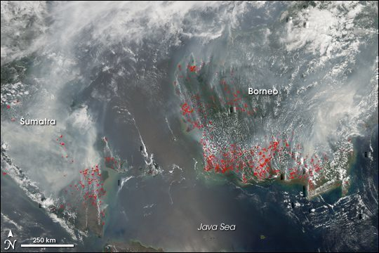 indonesia-forest-fires-cancellations