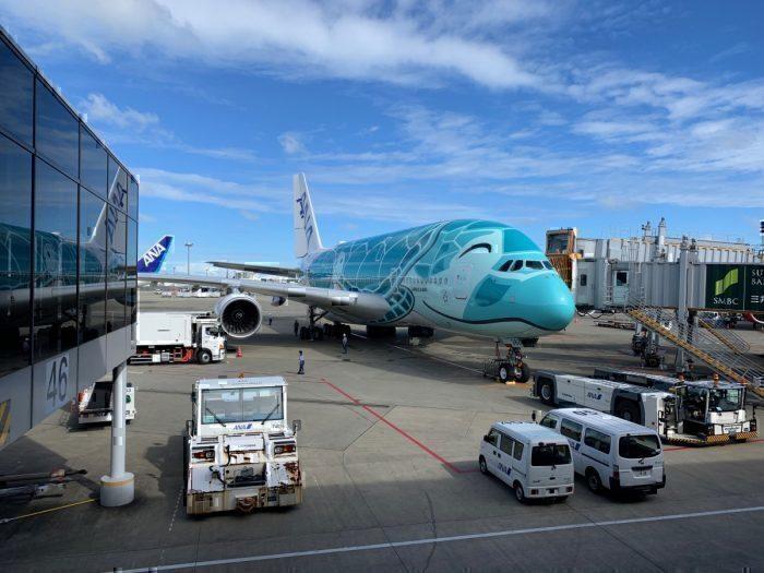 ANA A380, Sea turtle