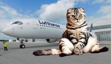 Lufthansa, Lost Cat, Washington Dulles