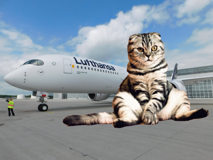 Lufthansa, Lost Cat, Washington Dulles