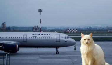 Aeroflot Cat