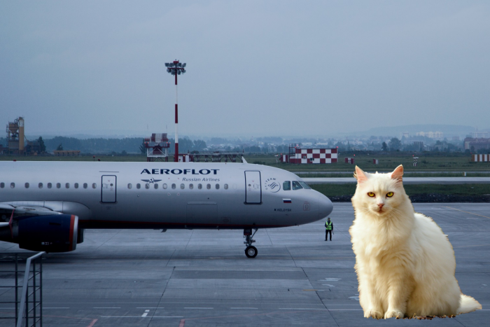 Aeroflot Cat