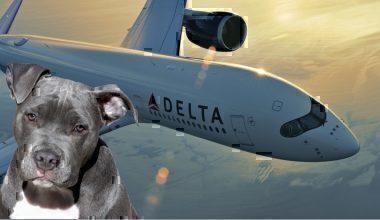 Delta pit bull