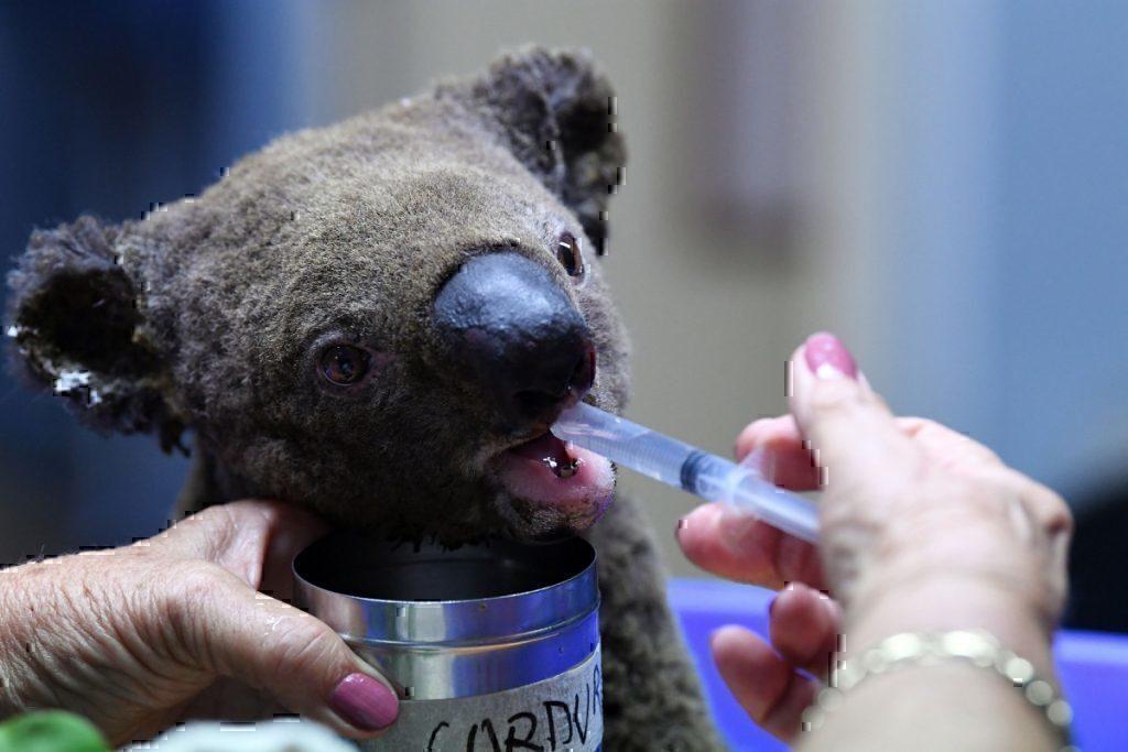 boeing-australia-wildfire-donation-getty