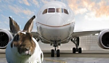 united business class bunny