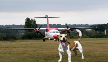 dog compensation
