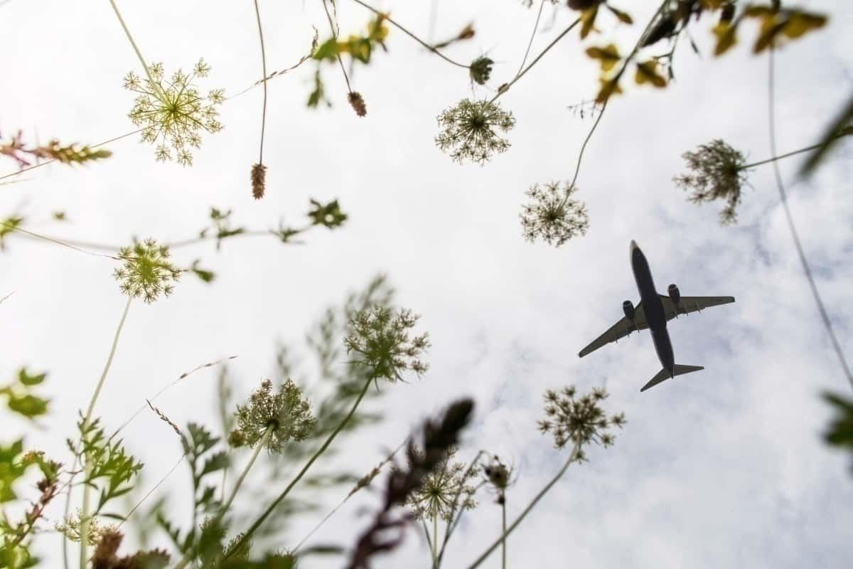 Aircraft flies above field of fauna