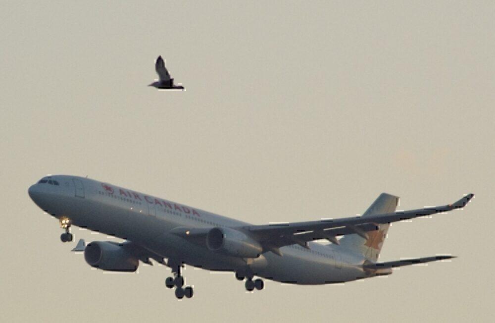 Air Canada approach bird
