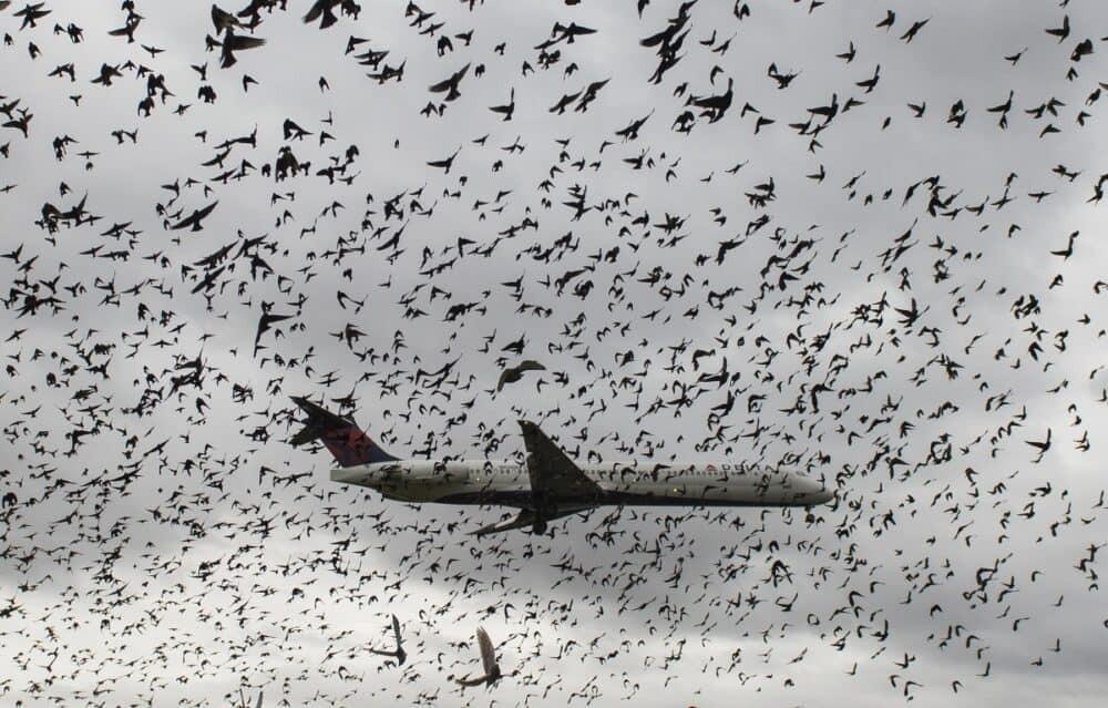 delta bird flock