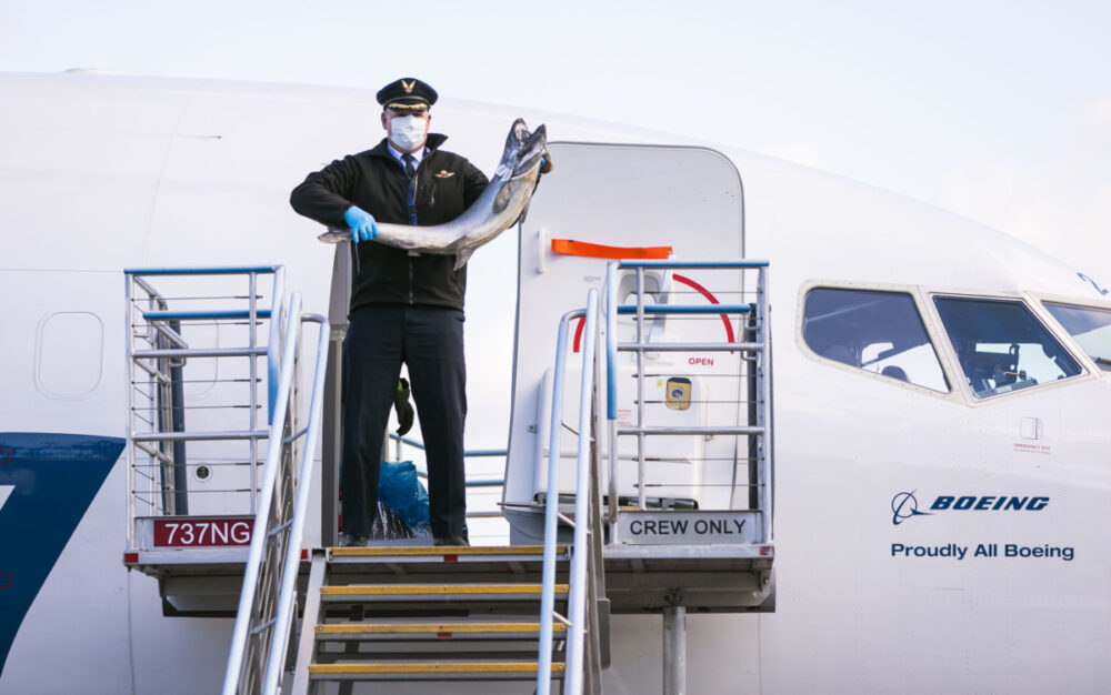 Alaska Airlines Transports Salmon To Feed Healthcare Workers
