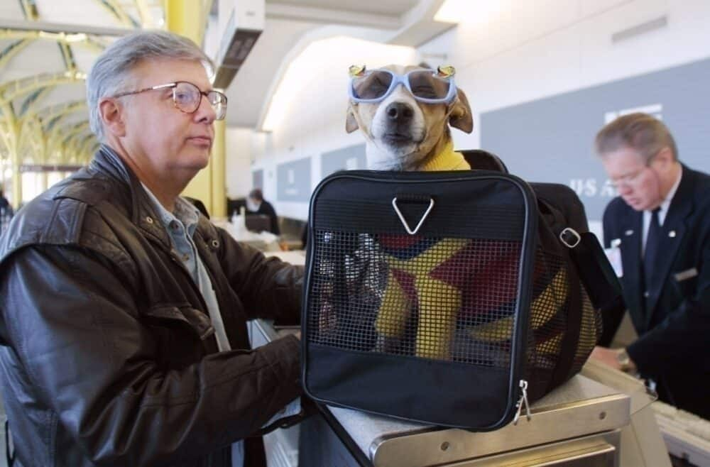 Pet dog with glasses checks in