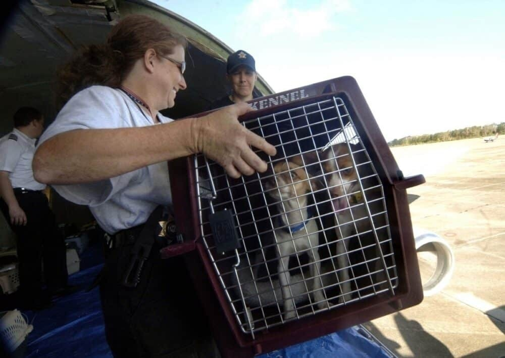 Dogs evacuated from hurricane Katrina