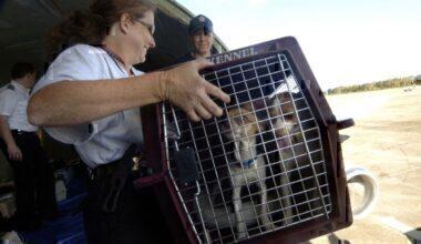 Dogs evacuated from hurricane Katrina