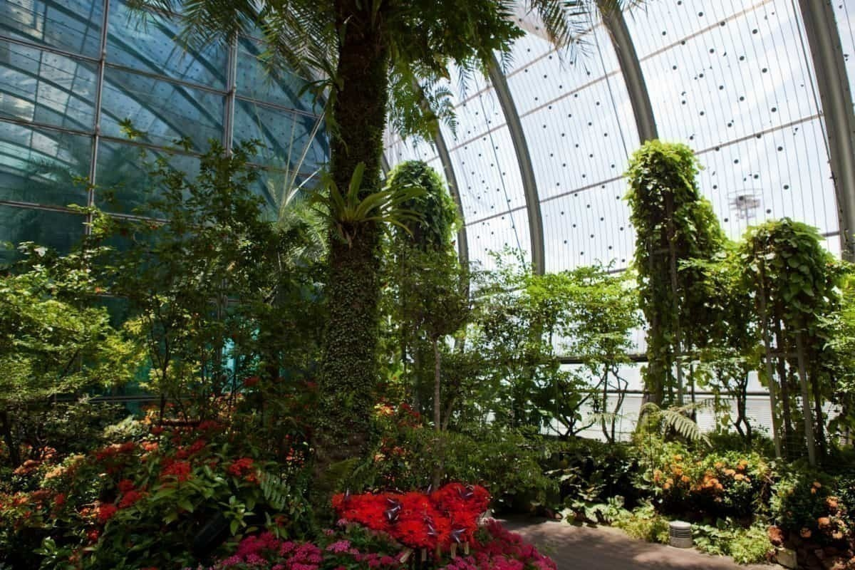 Changi Airport forest
