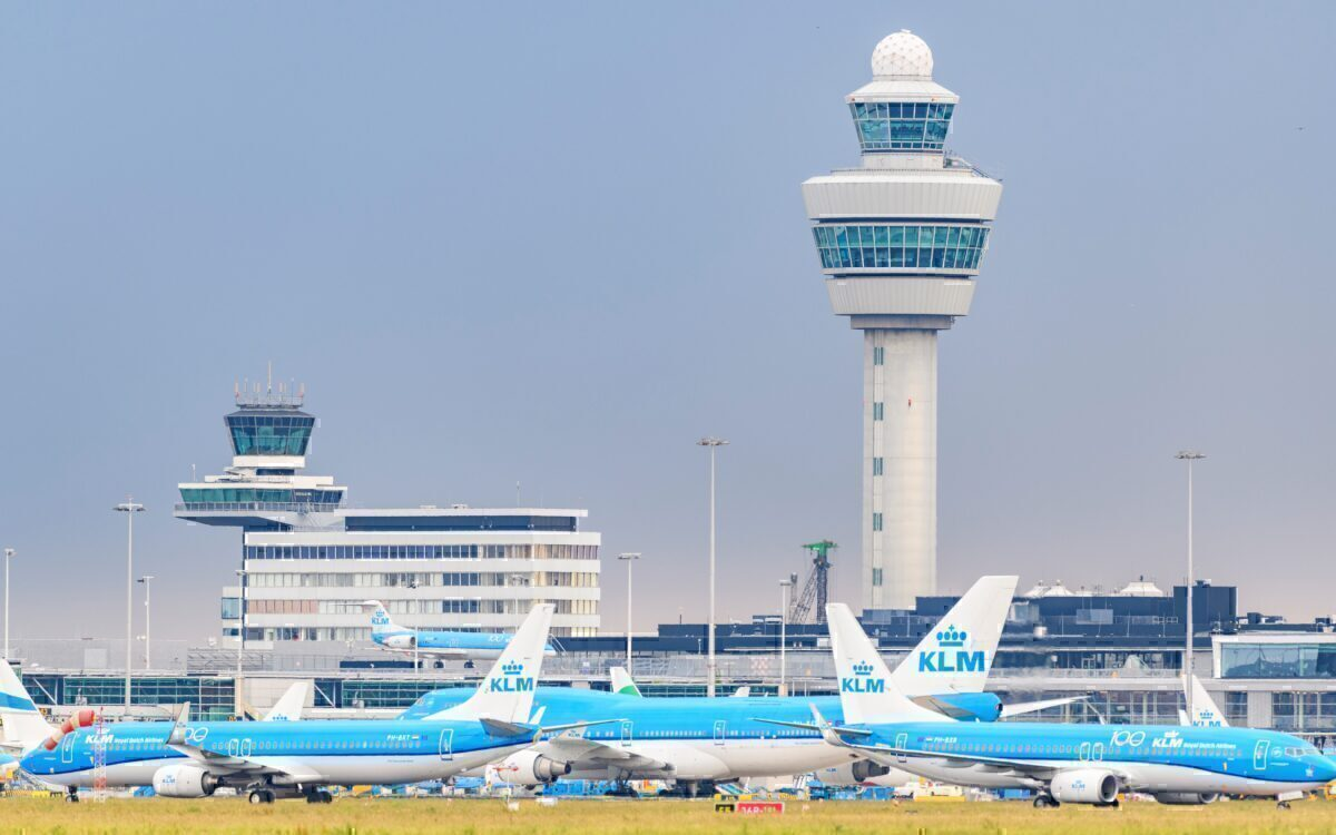Pigs Vs Geese: The Bizarre Battle For Amsterdam Schiphol Airport