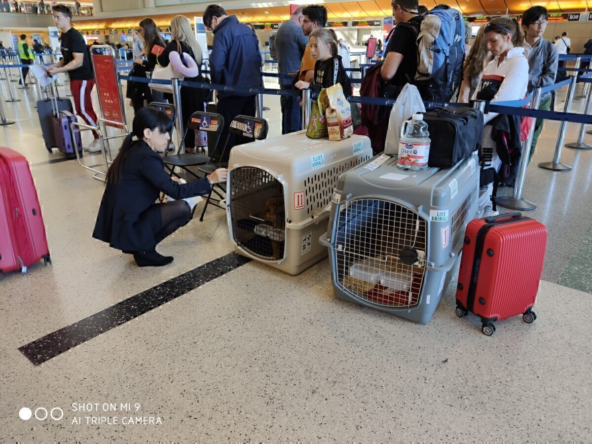 Dogs at LAX