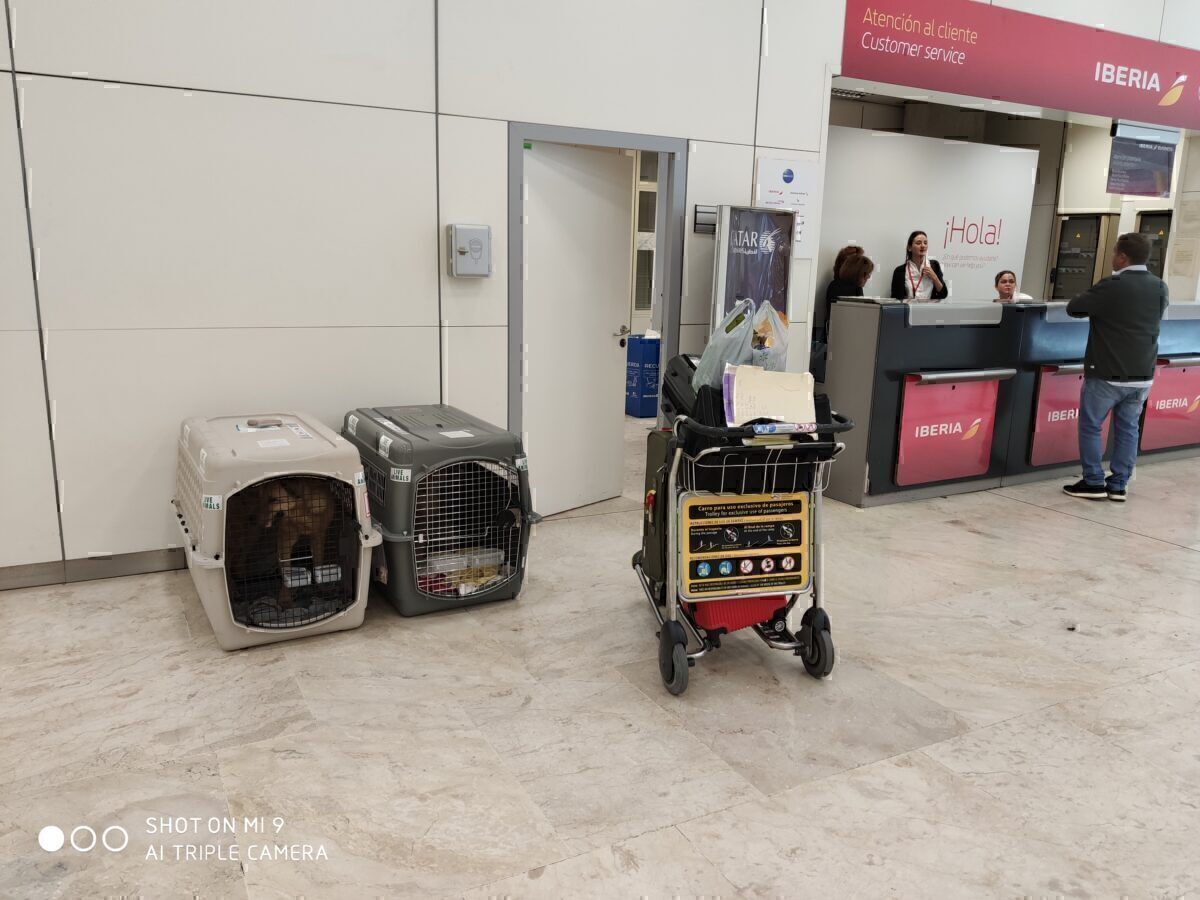 Dogs and cat at LAX