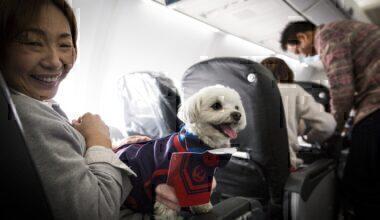 Dog on a plane getty