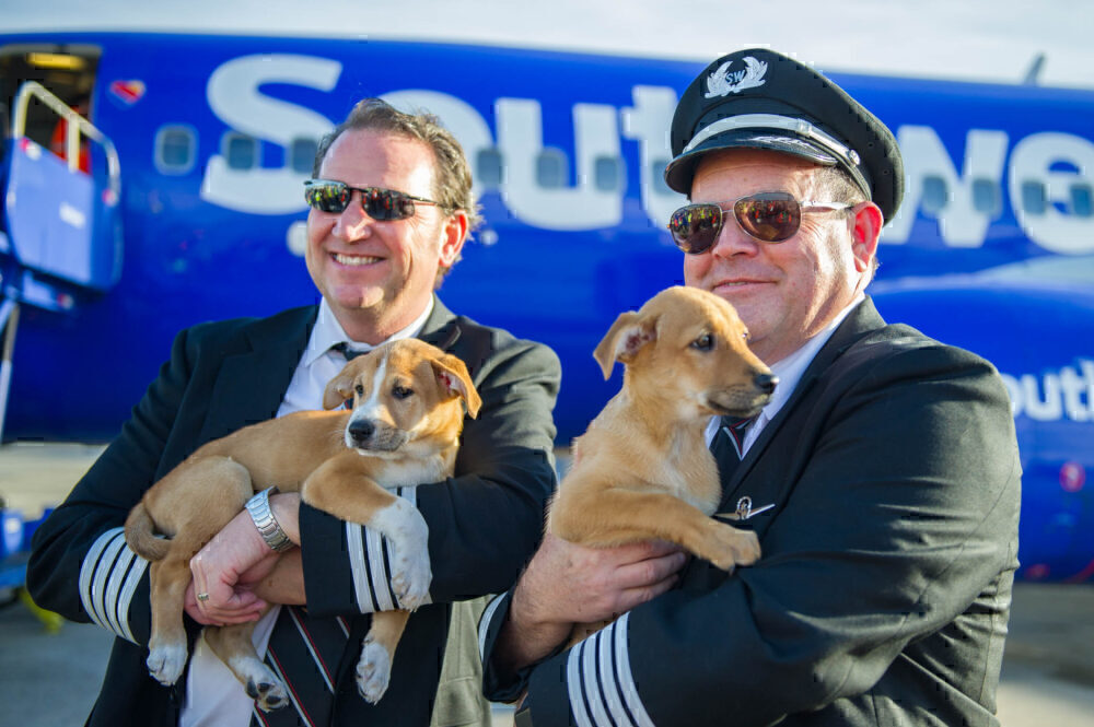Southwest dogs