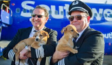 Southwest dogs