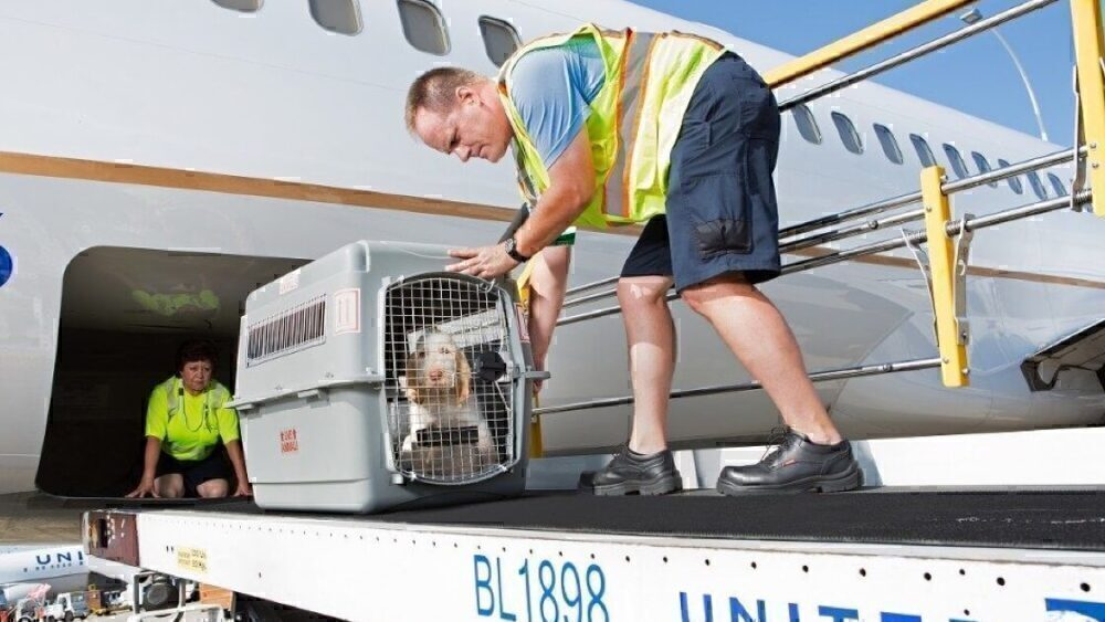 United Airlines dog in hold