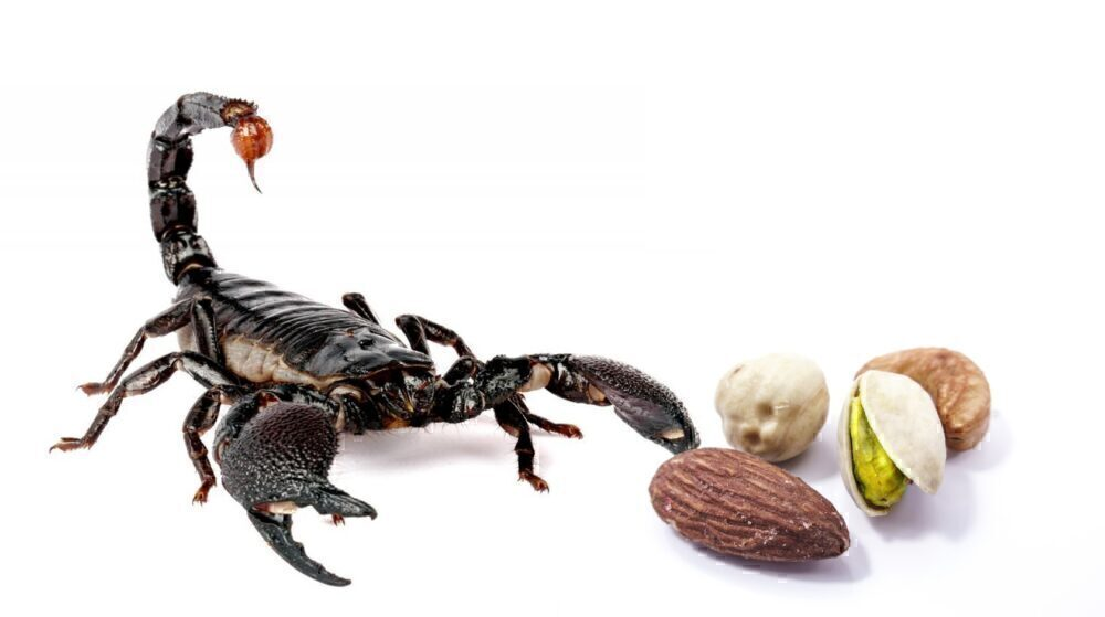 Scorpion on GOL flight