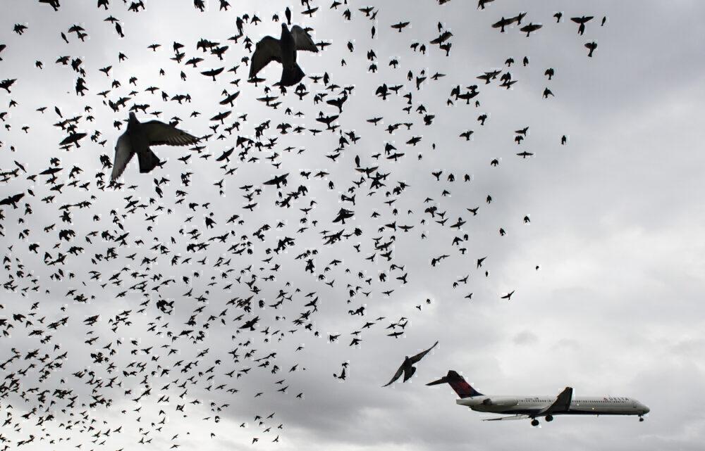 Birds Delta Air Lines