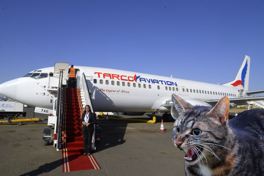Angry Cat Attacks Pilot Forcing Boeing 737 Diversion
