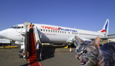 Angry Cat Plane