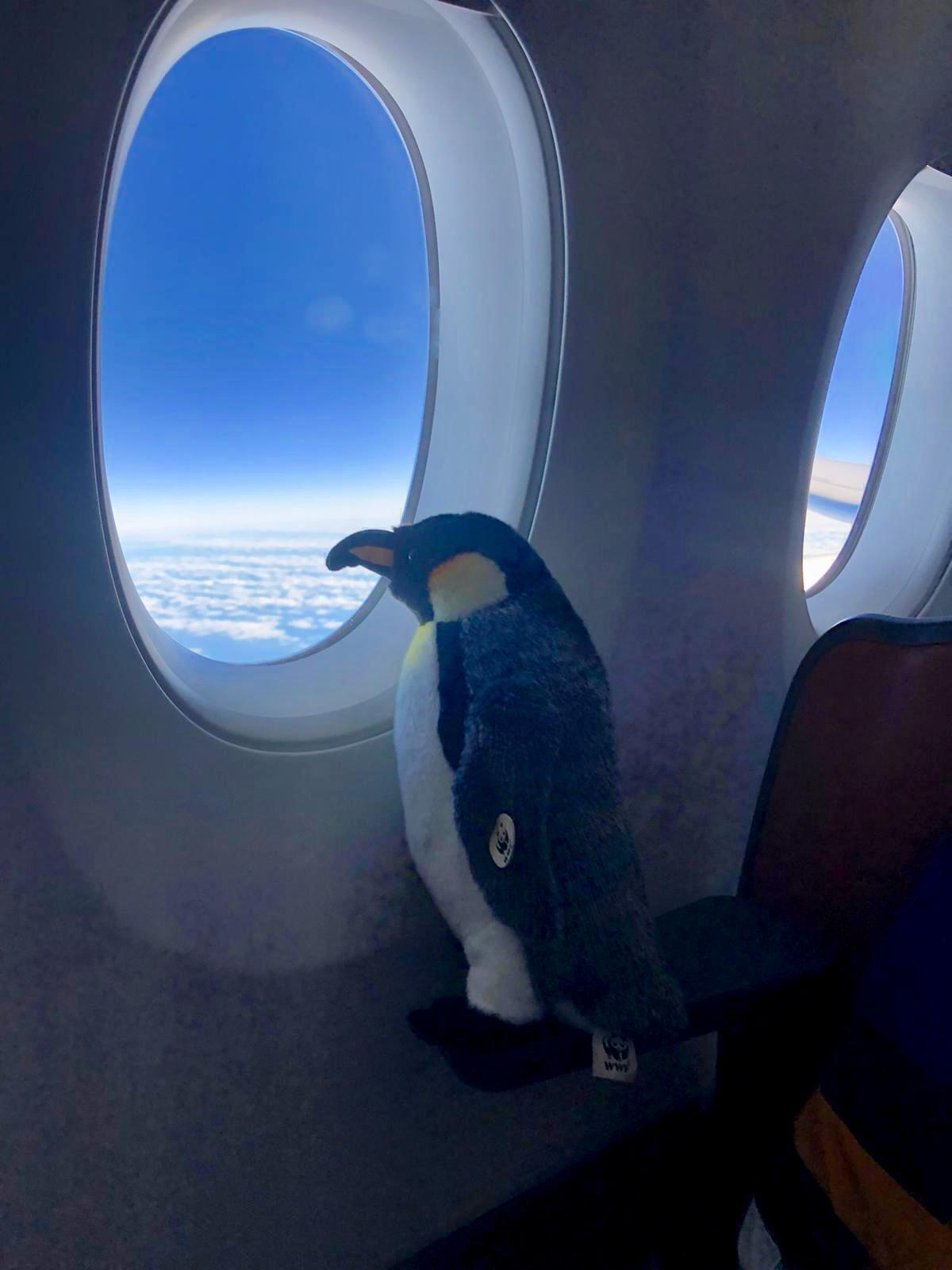 A stuffed toy penguin gazes out of the Airbus A350's window