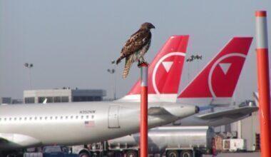 Bird At Airport