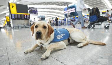 Heathrow Guide Dog