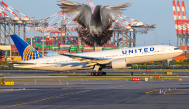 Jo United Pigeon