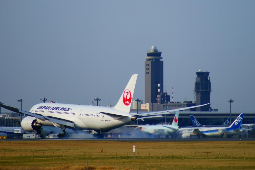 """Runway"" Tortoise Delays Flights Leaving Tokyo Narita Airport"