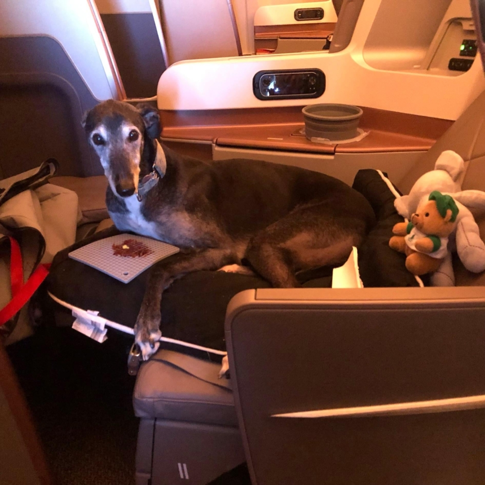 Business Class flight with Singapore Airlines Greyhound